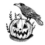 Crow and pumpkin engraving vector illustration. Crow bird and halloween pumpkin engraving vector illustration. Scratch board style imitation. Hand drawn image Stock Photography