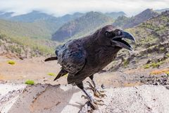 Crow, Raven, Bird, Black, Dark Stock Photo