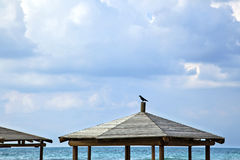 Crow at the Beach Stock Photography