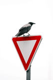 Crow on road sign Stock Photography