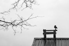 Crow on the roof Royalty Free Stock Photography
