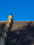 Crow on a Roof. A crow sitting on a roof stock photo