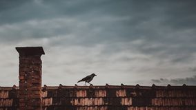 Crow on rooftop Royalty Free Stock Image