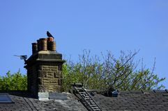 Crow sat on the chimney Stock Photo