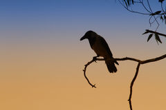 Crow silhouette. A crow silhouette at dusk Royalty Free Stock Image
