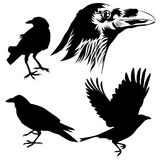 Crow silhouette. Poses of crow and close up drawing face silhouetted vector in eps10 Stock Image