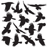 Crow silhouette set 01. Crow silhouette collection vector set 01 Stock Images