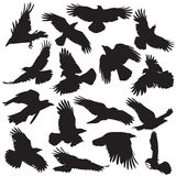 Crow silhouette set 02. Crow silhouette collection vector set 02 Royalty Free Stock Photography