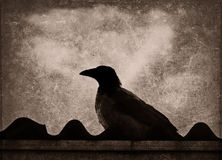 Crow silhouette Royalty Free Stock Photos