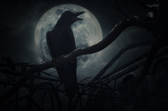 Crow sit on dead tree trunk and croak over fence, old grunge castle, moon and cloudy sky, Mysterious background, Halloween concept royalty free stock photos