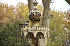 The Crow. Sits on the fountain in park alone Stock Photo