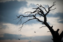 Crow sits in silhouette on a dead branch. Bare branches of the tree and the crows Stock Images