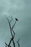 Crow Sitting On Branch Silhouette. A crow sitting on a tree branch silhouetted against cloudy sky in portrait orientation Stock Image
