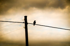 Crow sitting on a power line. Silhouette of crow sitting on a power line royalty free stock photography