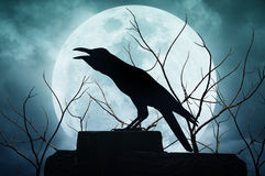 Crow sitting on the rock and croaks against full moon Stock Photos