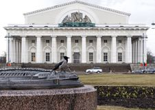 Crow sitting on a stone in front of the exchange building in St. Petersburg on a rainy day. Bird in the city royalty free stock photos