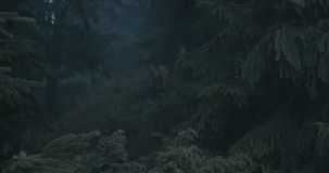 Crow sitting on a stump of a broken tree in the Carpathians in slo-mo stock video footage