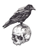 Crow on Skull Stock Images