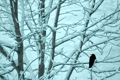 Crow on a snow covered tree Royalty Free Stock Photos
