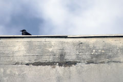 Crow standing on wall Stock Photography