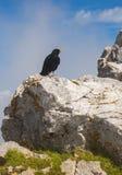 Crow, Stol mountain, Slovenia Royalty Free Stock Images