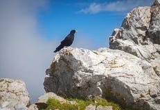 Crow, Stol mountain, Slovenia Royalty Free Stock Photography