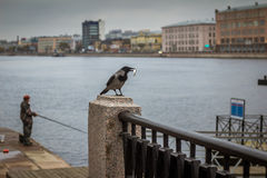 The Crow stole the fish from the fisherman. St. Petersburg, embankment of the river `Neva`. The Crow stole the fish from the fisherman Royalty Free Stock Photos