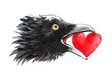 Crow with a stolen heart Royalty Free Stock Image