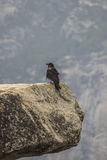 Crow on stone Royalty Free Stock Photography