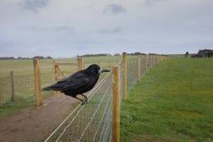 Crow of Stonehenge, England. Crow of Stonehenge, Wiltshire, England royalty free stock photo