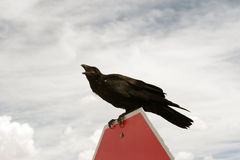 Crow on stop sign Stock Images