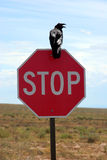 Crow on stop sign. Black crow on a stop sign royalty free stock photos