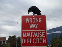 Crow on street sign Royalty Free Stock Photo