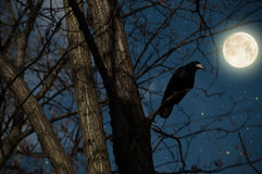 Crow on a tree. At full moon night Stock Image