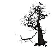 Crow Tree Royalty Free Stock Photo