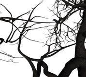 Crow Tree Stock Images
