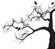 Crow Tree Royalty Free Stock Image