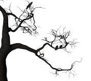 Crow Tree Royalty Free Stock Photos