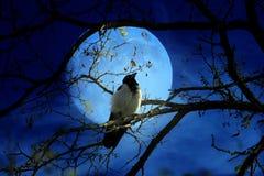 Crow and tree Stock Photo