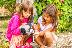 Crow and two little girls. Two little girls are helping a crow with a broken wing royalty free stock image