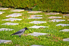 Crow on unmarked grave scene Royalty Free Stock Photography