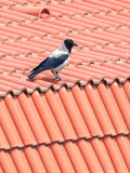 Crow urban house roof Royalty Free Stock Images