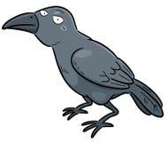Crow Stock Photo