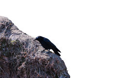 Crow on the wall isolated on white background. Object with clipping path stock photos