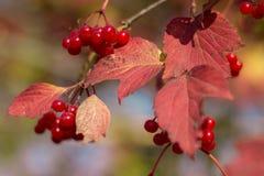 Crowan-árvore imagens de stock