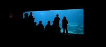 Crowd at aquarium royalty free stock photography