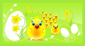 Crowd of chickens on easter background Stock Photography