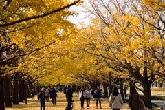 Crowd enjoying walk in autumn ginkgo foliage Royalty Free Stock Photo