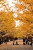 Crowd enjoying walk in autumn ginkgo foliage stock image
