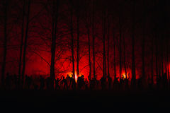 Crowd of hungry zombies in the woods. Silhouettes of scary zombies walking in the forest at night. red alert Royalty Free Stock Image